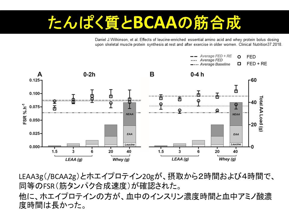たんぱく質とBCAAの筋合成速度